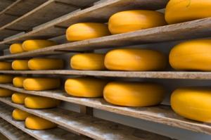 Cheese300x199